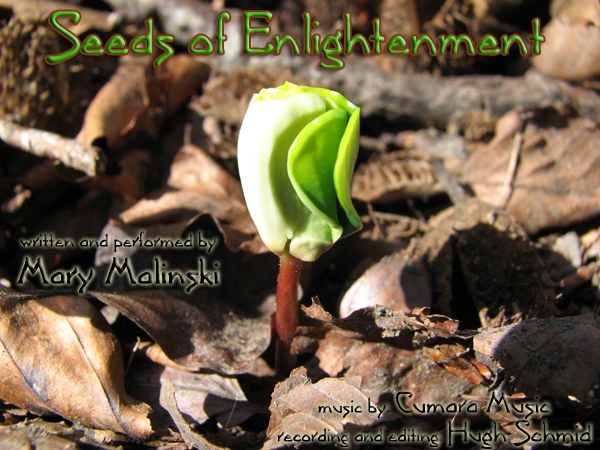 planting seeds of enlightenment guided meditation